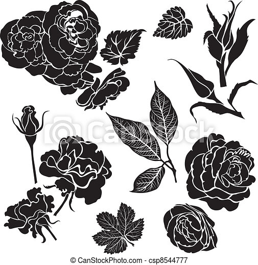 Rose flowers - csp8544777