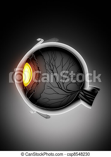 Human eye anatomy - csp8548230