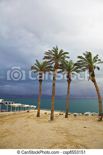Palm trees and beach canopies in a thunder-storm - csp8553151