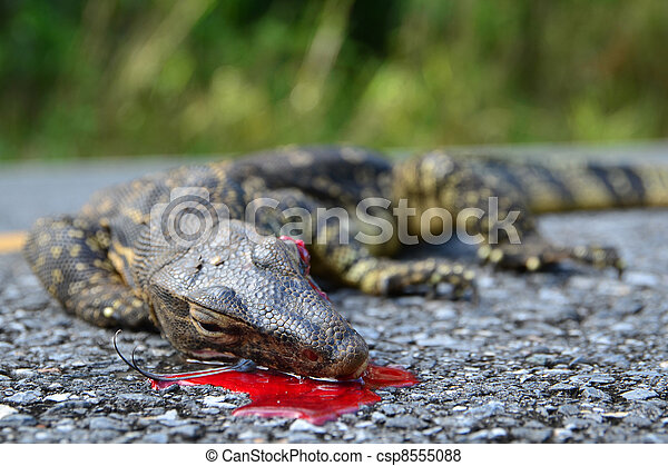 mye lizard gratis xx video nedlasting