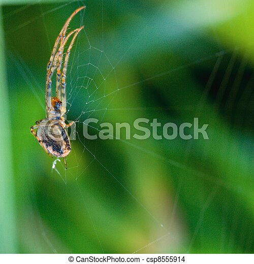 Spider and his net - csp8555914