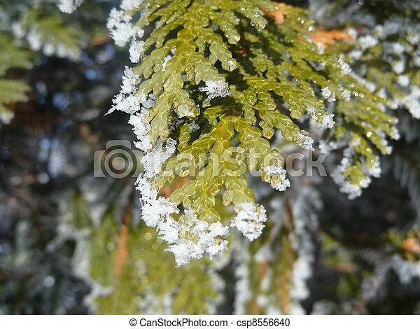 Melting Hoar frost - csp8556640