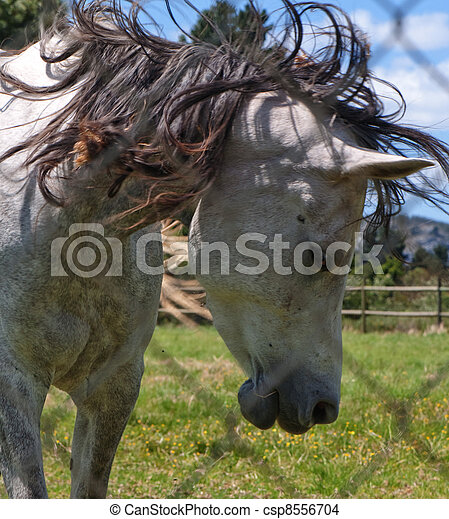 Unruly mane of horse - csp8556704