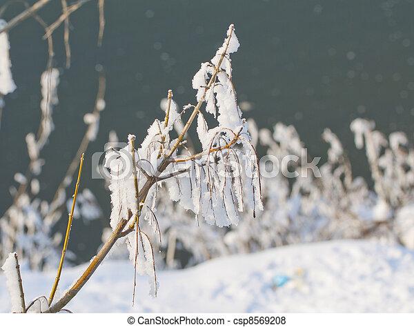 Freeze - csp8569208