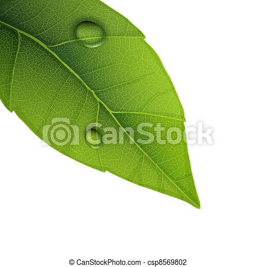 Green leaf with water droplets, closeup vector illustration. - csp8569802