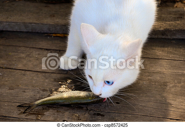 Stock images of cat eating a fish white cat eating a for Can cats eat raw fish