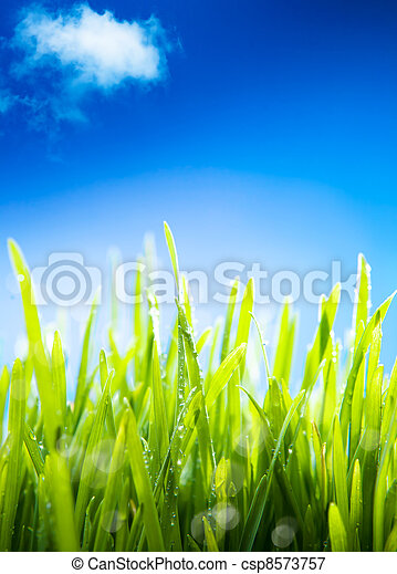Fresh morning dew on the grass in the spring, a natural spring background - csp8573757