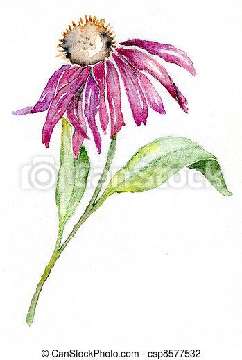 Purple Coneflower - csp8577532