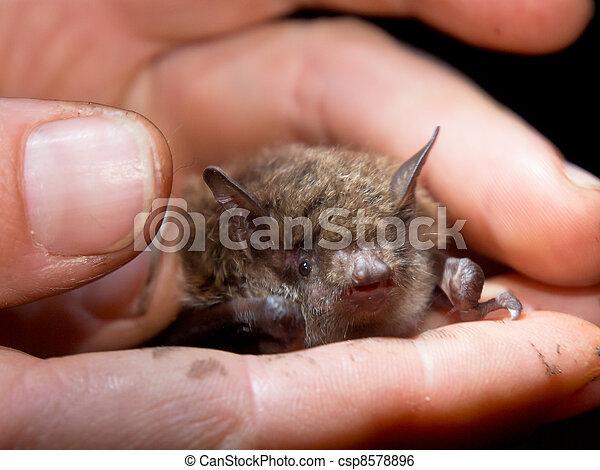 Bat in hand of researcher - csp8578896