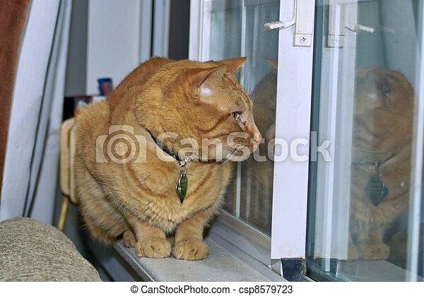 Cat on the Window Sill - csp8579723