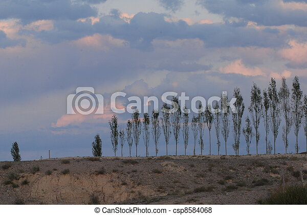 Lne of trees in barren landscape - csp8584068