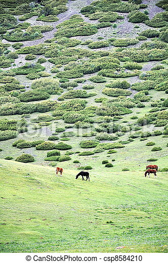 Grazing horses on hilltop - csp8584210