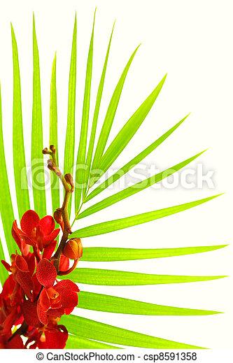 folhas, palma, vermelho, orquídea - csp8591358