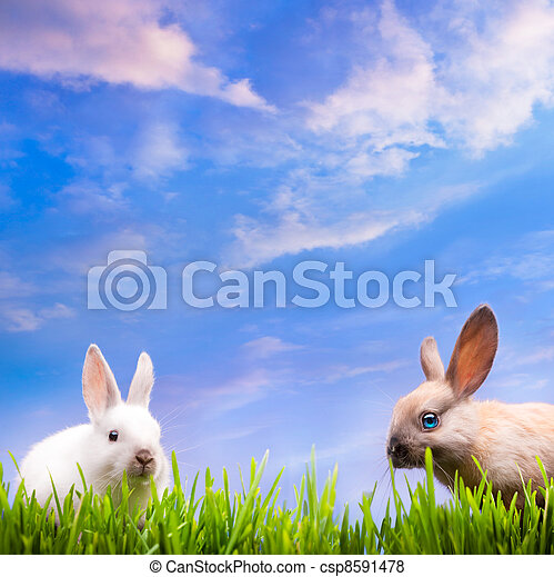 art couple  little Easter rabbits  on green grass - csp8591478