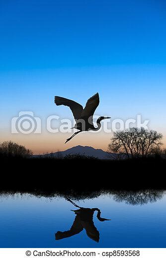 Egret Flying on Blue Evening - csp8593568