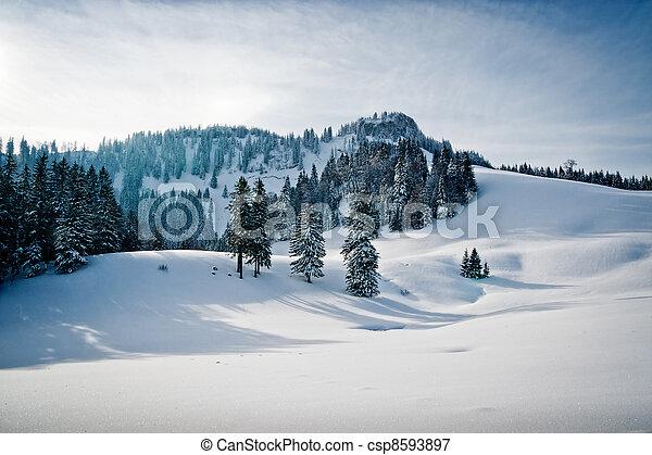 hiver, paysage, forêt - csp8593897