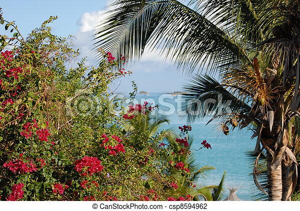 Bourganvillea and palm tree;Antigua - csp8594962