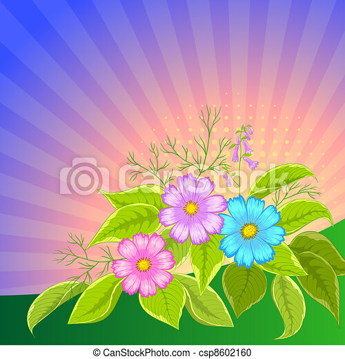 Flower background radiant, cosmos - csp8602160