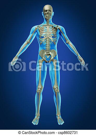 Human Body and Skeleton - csp8602731