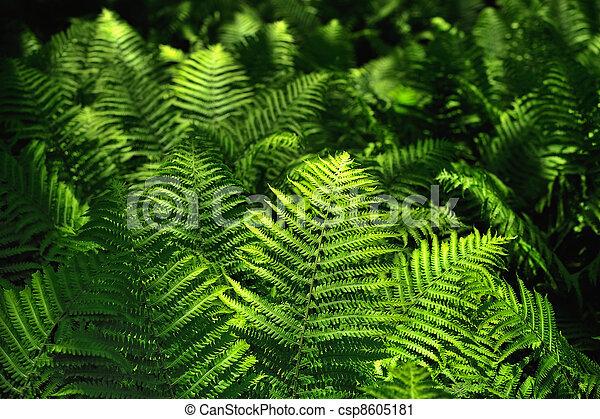 Botanical - csp8605181