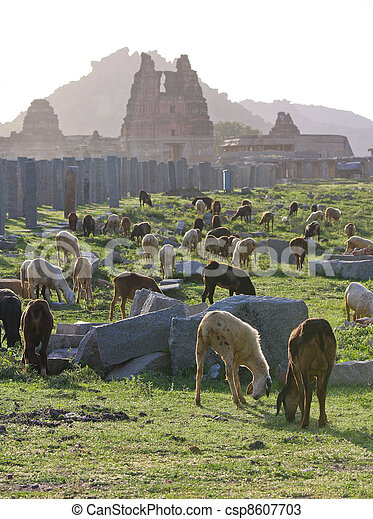 Goats at the remains of the ancient capital of the South Indian Vijayanagara Empire in Hampi, Karnataka - csp8607703