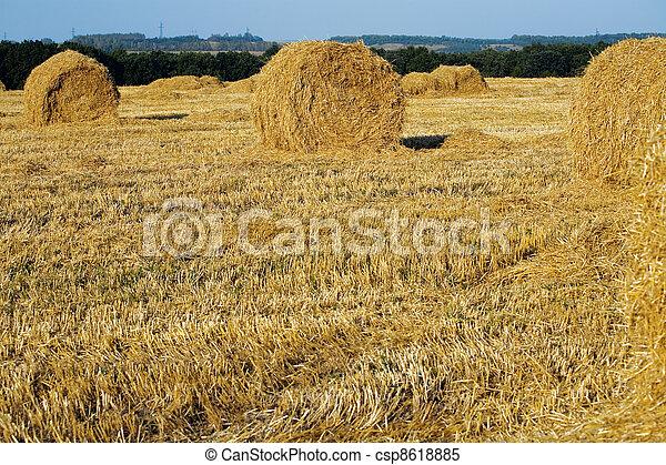 amarillo, Almiares, puro, campo, Cosecha, tarde, verano - csp8618885