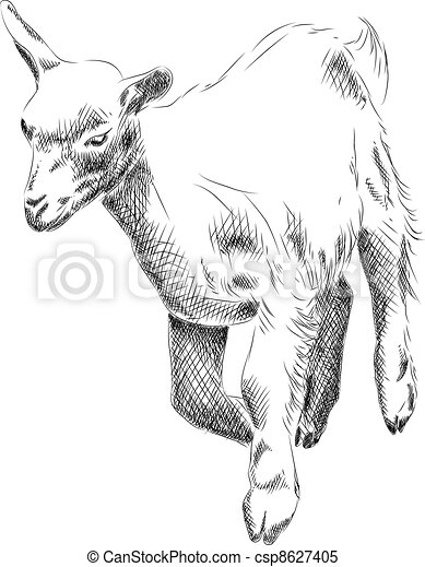 small goat - csp8627405