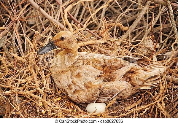 :::::Por su nido los conocerás::::: Can-stock-photo_csp8627636