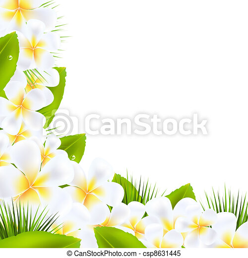 Frangipani Flowers Borders With Leaf - csp8631445