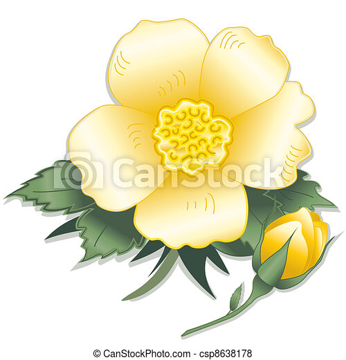 Wild Yellow Rose Flower - csp8638178