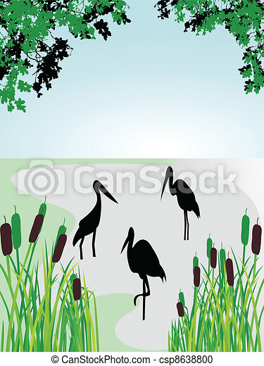 nature forest background - csp8638800