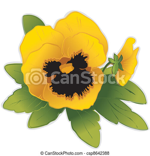 Golden Pansy Flowers - csp8642388