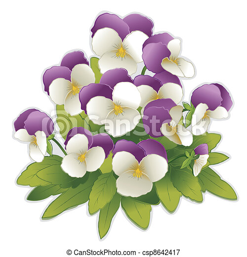 Johnny Jump Up Pansy Flowers - csp8642417