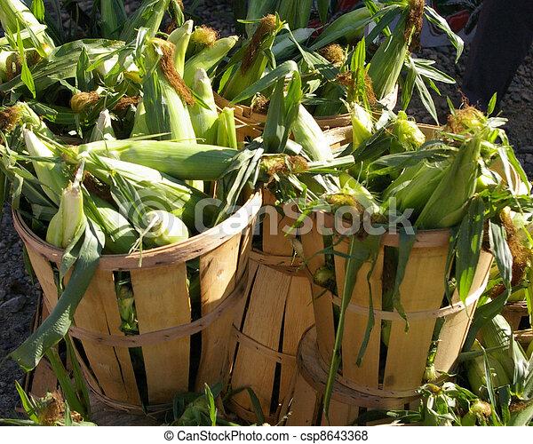 Rustic Corn Bushels - csp8643368