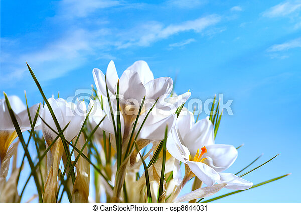 Beautiful Spring Flowers on blue sky background - csp8644031