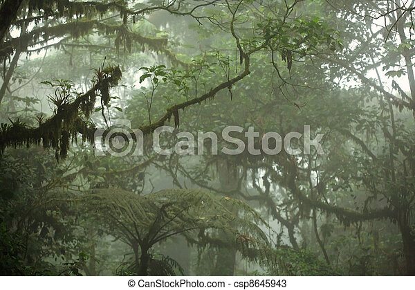 Tropical Rain Forest Canopy - csp8645943