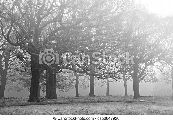 Winter Autumn Fall foggy landscape of forest and avenue of trees - csp8647920