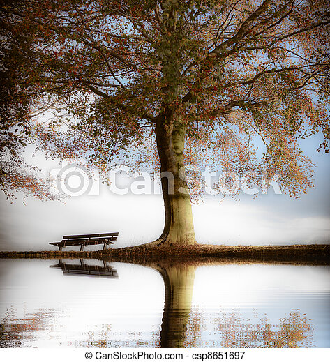 image de bois parc automne vieux banc vieux bois banc dans csp8651697 recherchez. Black Bedroom Furniture Sets. Home Design Ideas