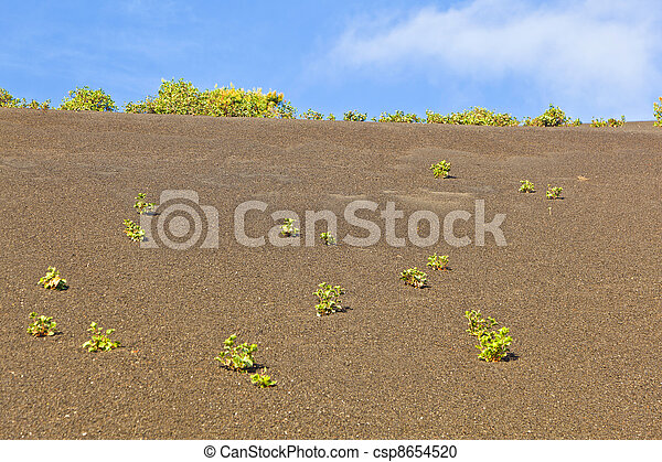 sparse vegetation on volcanic hills in Timanfaya National Park with route - csp8654520