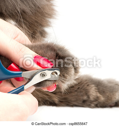 Trimming cat's nails - csp8655647
