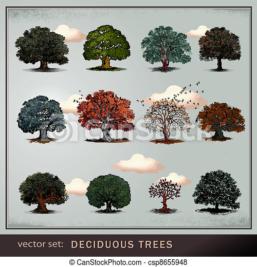vector set of trees - csp8655948