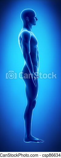 Male figure in anatomical position lateral view - csp8663459