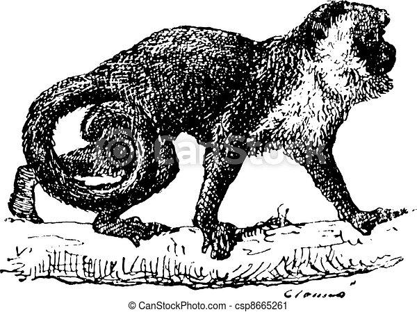 Monkey vintage engraving - csp8665261
