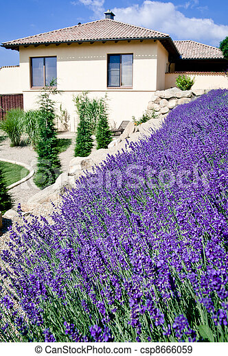Family house with lavender field - csp8666059