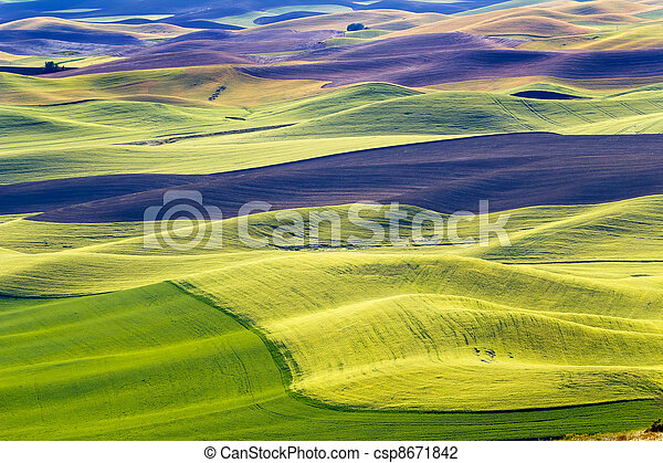 Yellow Green Wheat Fields Black Dirt Fallow Land from Steptoe Butte at Palouse Washington State Pacific Northwest.  Steptoe Butte is the highest spot in the Palouse, Washington. - csp8671842