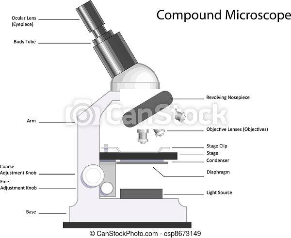 Dibujos de un microscopio y sus partes  Imagui