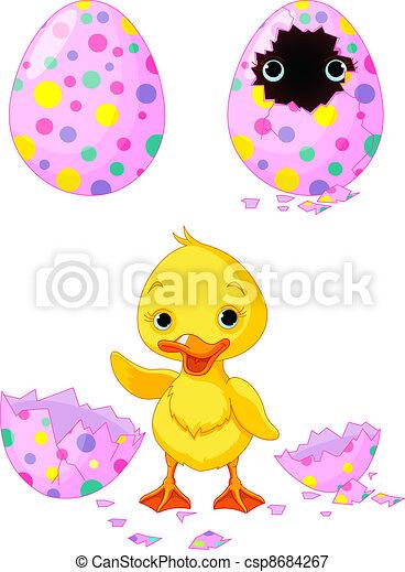 Easter duckling - csp8684267