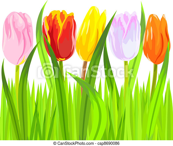 vector of colorful spring tulips in grass - csp8690086