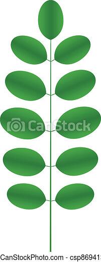 Acacia twig - csp8694135