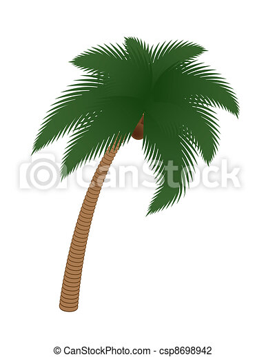 coconut palm tree - csp8698942